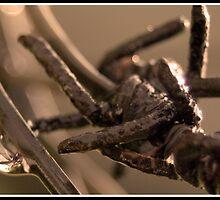 Barb wire  by suzUnLtd