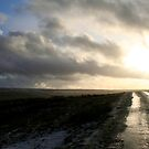 Country Road in Early January by Laura Jane Robinson