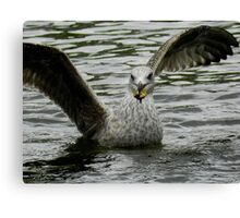 The Seagull has Landed Canvas Print