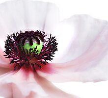 soul of poppy by lucyliu
