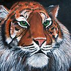 Tiger by Sandy Clifton
