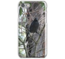 Currawong doing the splits iPhone Case/Skin