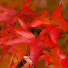 Colours of Autumn by Alex Cassels