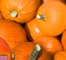 ╭∩╮( º.º )╭∩╮Ontario Pumpkins & Pumpkin Carriage ~ Raising Awareness-PILLOWS-TOTE BAGS,JOURNALS ECT.. ╭∩╮( º.º )╭∩╮  Sticker