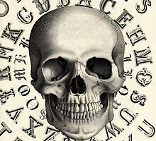 Skull by curiouslondon