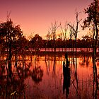 Wetland Sunset by Tracie Louise
