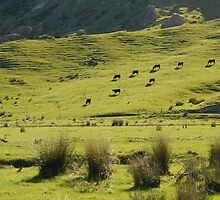 New Zealand farm land by nzpixconz