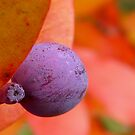 purple berry from a tree by tego53