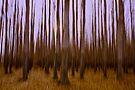 Forest Escape by Dan Mihai