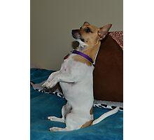 My meerkat dog Photographic Print