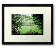 Pasture & Cows Framed Print