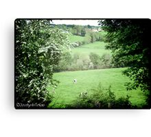 Pasture & Cows Canvas Print