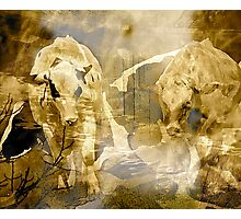 Rural .. Abstract Cows Photographic Print