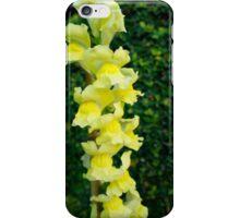 Yellow Bells* iPhone Case/Skin