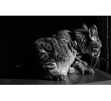 Creepy Cat Photographic Print