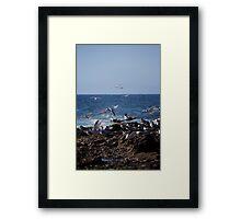Birds over Newcastle Baths Framed Print