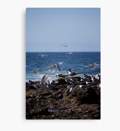 Birds over Newcastle Baths Canvas Print