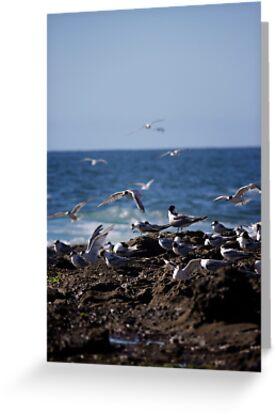 Birds over Newcastle Baths by Daniel Rankmore