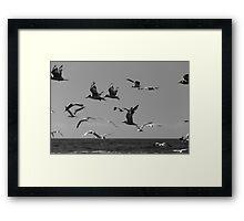 Flight Over Newcastle Baths Framed Print