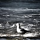 Newcastle Beach Gull & Surfers by Daniel Rankmore