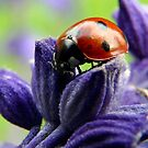 ladybug on salvia by tego53
