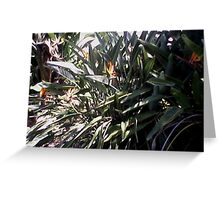 bird of paradise collection Greeting Card