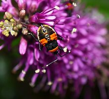 Bugs life by Jemma Richards