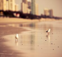 Surfers Paradise, Gold Coast Queensland by Fun Kitten Studios