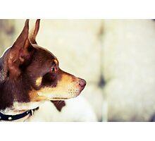 Red Dog Photographic Print