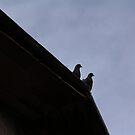 Love Birds by teresalynwillis