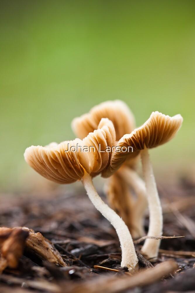 Mushroom by Johan Larson