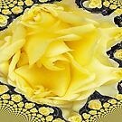 Roses 2 by G.T.S Photos