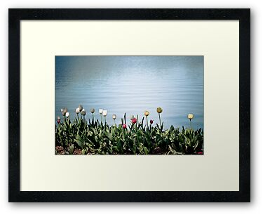 tulips by the water by Fun Kitten Studios