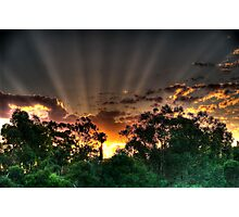 setting suns rays through the trees #2 Photographic Print