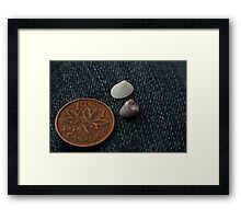Big World Small Critters  Framed Print