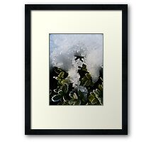 Cold cover Framed Print