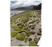 Port Davey wilderness beach Poster