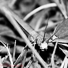 Stick Insect  by Patrick Reid