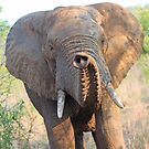 Look at my pretty trunk! by jozi1