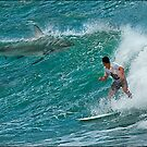 board bait by carol brandt