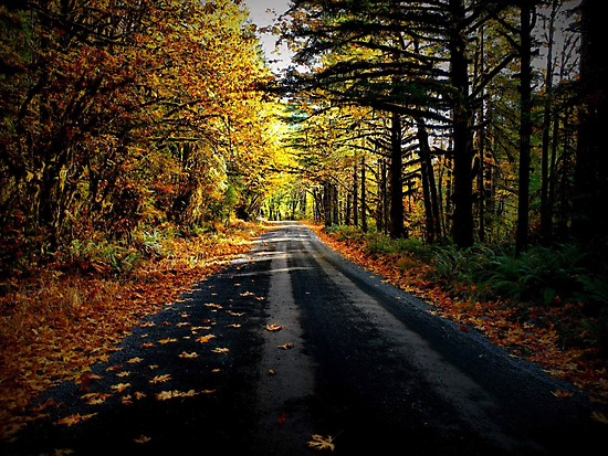 The Old Road by Charles & Patricia   Harkins ~ Picture Oregon