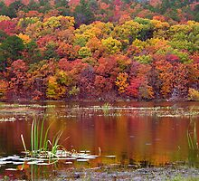Clayton Lake Reflections by Carolyn  Fletcher