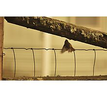 Ruby Crown Kinglet Photographic Print