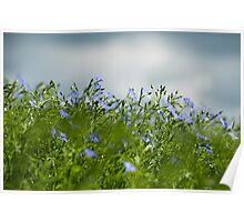 Linseed Poster