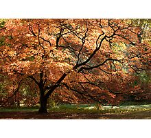 Magnificent Autumn Photographic Print