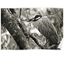 Night Heron BW Poster