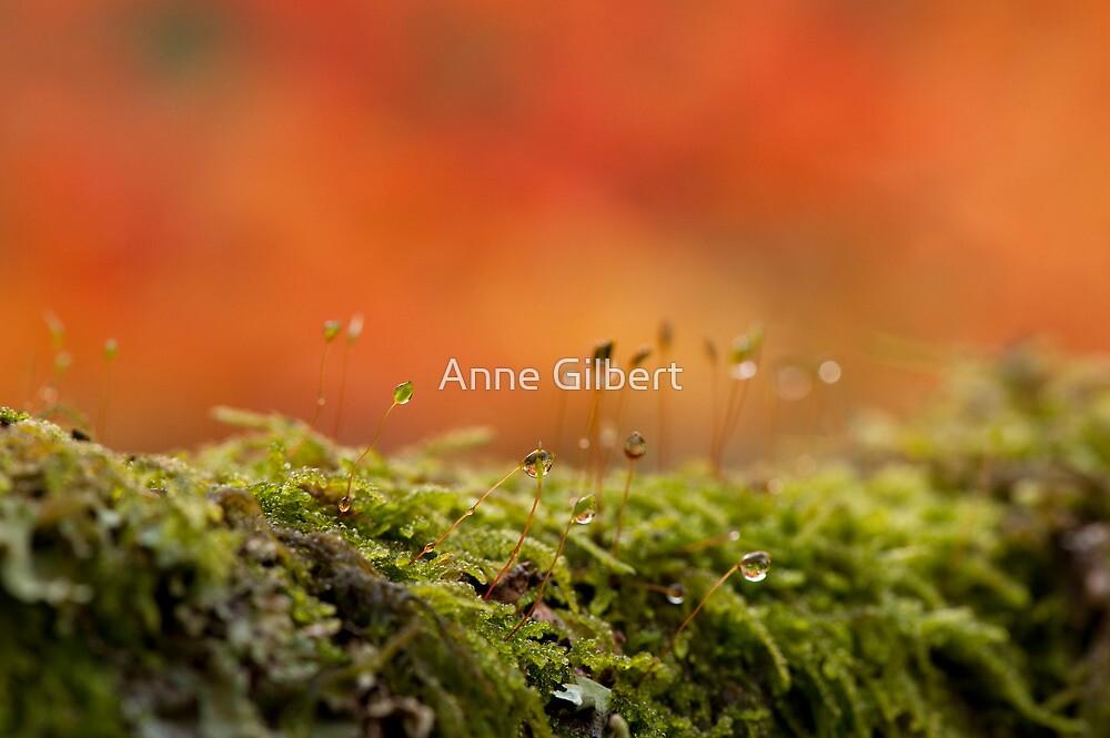 The Miniature World of Moss  by Anne Gilbert