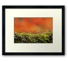 The Miniature World of Moss  Framed Print