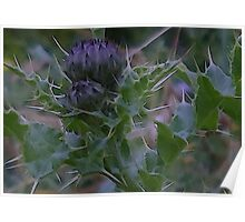 Thistle Buds Poster