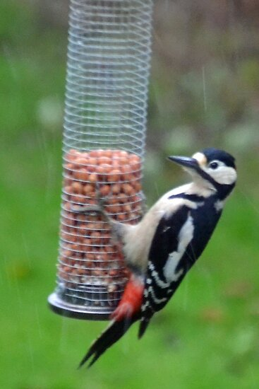 Woodpecker In The Rain by lynn carter